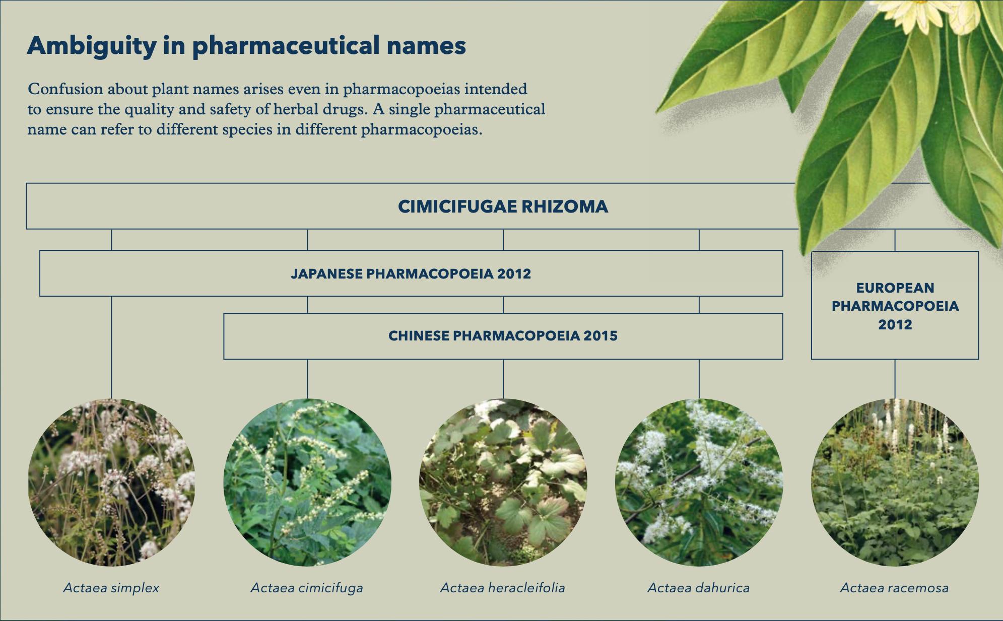 Uppsala Reports Navigating The Plant Names Jungle